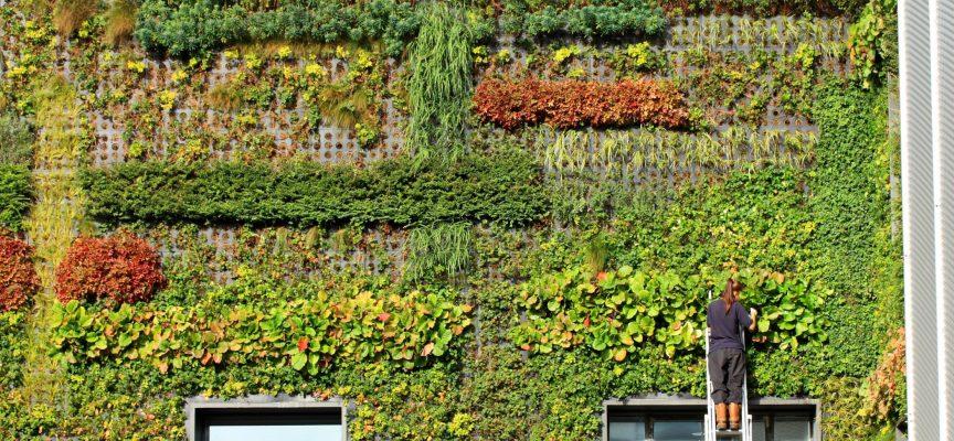 manutenzione installazione giardino verticale parete verde